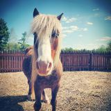 Mooi paard Royalty-vrije Stock Fotografie
