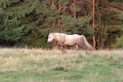Mooi paard in de bergen Royalty-vrije Stock Afbeelding