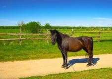 Mooi paard dichtbij de weg royalty-vrije stock afbeelding