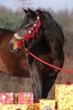Mooi paard met Kerstmisgiften stock foto's