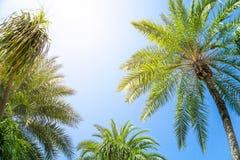 Mooi palmverlof en blauwe hemel met gloed lichteffect en exemplaarruimte, gebruik voor de zomer en strandinhoud royalty-vrije stock afbeelding