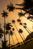 Mooi Panorama bij een Tropisch Strand Stock Afbeelding
