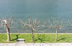 Mooi park langs meerkant Royalty-vrije Stock Foto's
