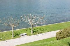 Mooi park langs meerkant Stock Afbeeldingen