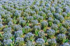 Mooi park met blauwe kleurenbloemen Stock Foto's