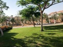 Mooi park met tropische mooie natuurlijke uitheemse gewassen, bomen met rode bloemen delonix, bloemblaadjes witte gebouwen in tro royalty-vrije stock foto's