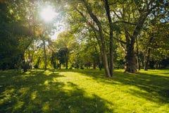 Mooi park in openbaar park met groen grasgebied, groene boominstallatie en een partij bewolkte blauwe hemel stock foto