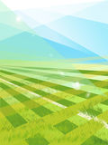 Mooi patroon van vers groen gras voor voetbalsport Stock Foto's