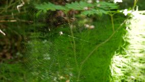 Mooi Perfect Spinneweb in Forest Moving In The Wind 4K stock videobeelden