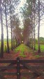 mooi platteland met de elegantste ingang I& x27; gezien ve stock fotografie