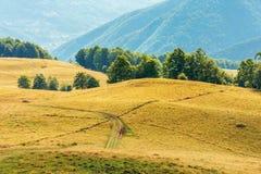 Mooi plattelandslandschap in de recente zomer stock afbeeldingen