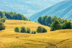 Mooi plattelandslandschap in de recente zomer stock afbeelding