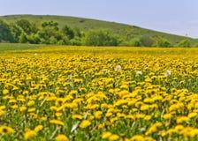 Mooi plattelandslandschap in Transsylvanië stock afbeeldingen