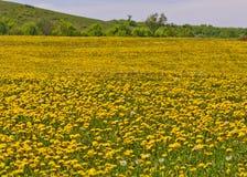 Mooi plattelandslandschap in Transsylvanië Stock Fotografie