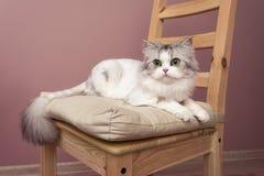 Mooi portret van het stellen kat stock foto's