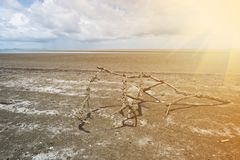 Mooi prasae rayong strand van Pak nam Natuurlijke mangrove bosmening in de Rayong-baai Thailand Aarddomein in Klaeng Foursqua stock foto's