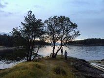 Mooi punt op Sleepbooteiland met een het uitspreiden zich arbutusboom stock fotografie
