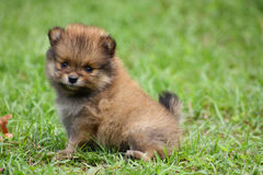 Mooi puppy Royalty-vrije Stock Fotografie