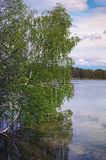 Mooi rivierlandschap, bezinning van grote boom in kalm water, bosaard vreedzame scène van lentetijdmeer Royalty-vrije Stock Afbeelding