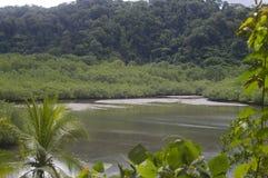 Mooi rivierlandschap in Costa Rica stock foto