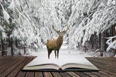Mooi rood hertenmannetje in behandelde sneeuw de feestelijke seizoenwinter FO stock afbeeldingen