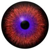 Mooi rood oog en purpere ronde 3d Halloween-oogappel vector illustratie