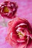 Mooi roze Stock Foto's