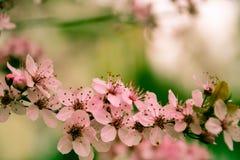 Mooi Roze Royalty-vrije Stock Afbeeldingen