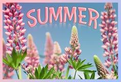 Mooi roze bloemen geschoten close-up tegen de hemel met de inschrijving stock foto