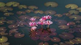 Mooi roze lotusbloem en lotusbloemblad Stock Foto's