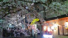 Mooi sakuraseizoen in de mening van de stadsstree van Kyoto met aardige brug voor achtergrond stock footage