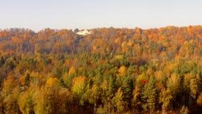 Mooi satellietbeeld van het gouden de herfstbos stock footage