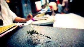 Mooi schepsel Dragon Fly met zwart bureau stock afbeeldingen