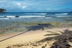Mooi schilderachtig Caraïbisch landschap, Dominicaanse Republiek stock afbeeldingen