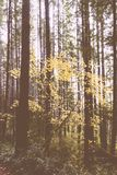 Mooi schot van een dik bos in de avond stock afbeeldingen