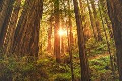 Mooi schot van een dik bos op een steile heuvel met het zonlicht die door de bomen glanzen royalty-vrije stock afbeeldingen