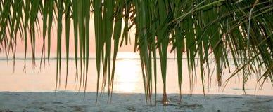 Mooi schot van een palm Stock Afbeeldingen