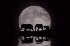 Mooi Silhouet van Afrikaanse Olifanten bij Moonrise Royalty-vrije Stock Fotografie