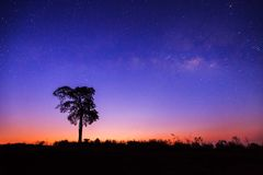 Mooi Silhouet van Boom en Melkweg stock afbeeldingen