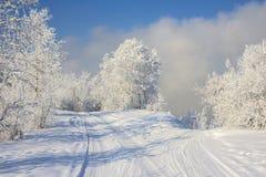 Mooi sneeuw de winterlandschap Stock Afbeeldingen
