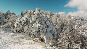 Mooi sneeuwlandschap het panorama van de winterbomen schot De winterlandschap met hoge sparren en sneeuw in bergen stock footage