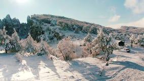 Mooi sneeuwlandschap het panorama van de winterbomen schot De winterlandschap met hoge sparren en sneeuw in bergen stock videobeelden