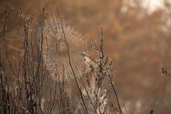 Mooi spinneweb met het close-up van waterdalingen Royalty-vrije Stock Afbeeldingen
