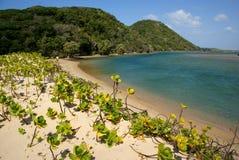Mooi strand bij Kosi-baai, Zuid-Afrika stock afbeeldingen
