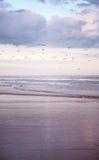 Mooi strand bij zonsondergang Royalty-vrije Stock Afbeelding