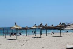 Mooi Strand Mallorca Stock Afbeeldingen