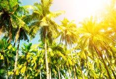 Mooi Strand Mening van aardig tropisch strand met rond palmen Stock Fotografie