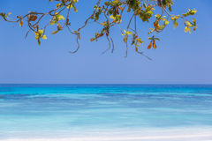 Mooi strand met bladkader en ruimte voor uw ontwerp Stock Foto's