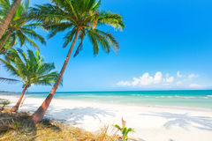 Mooi strand met kokospalm en overzees Royalty-vrije Stock Foto