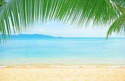 Mooi strand met palm over het zand Royalty-vrije Stock Fotografie